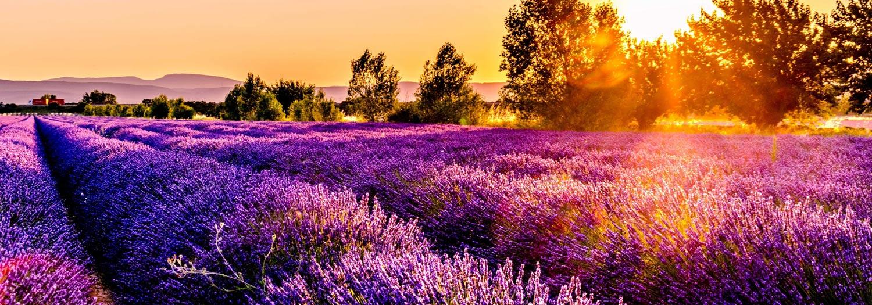 Photo d'un champs de lavande dans la Drôme provençale